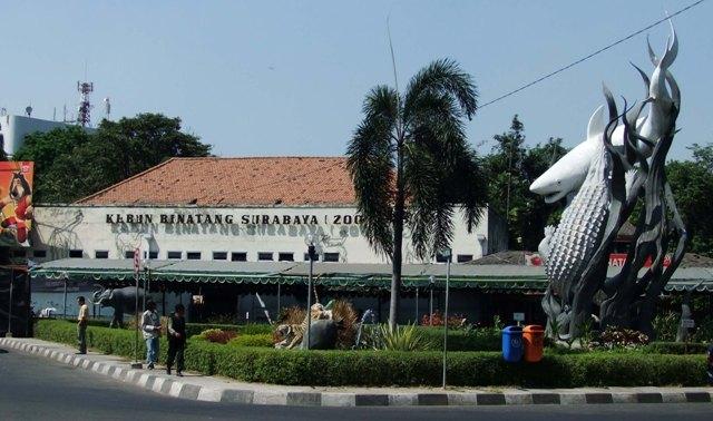 Tempat Wisata di Surabaya - Kebun Binatang Surabaya (Surabaya Zoo)