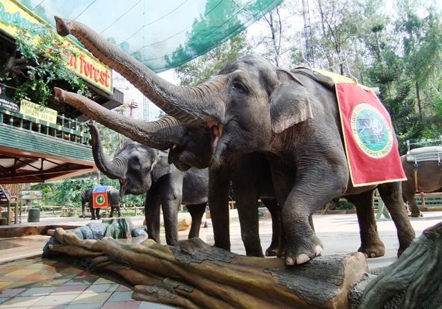 Tempat Wisata Puncak Bogor - Taman Safari Indonesia