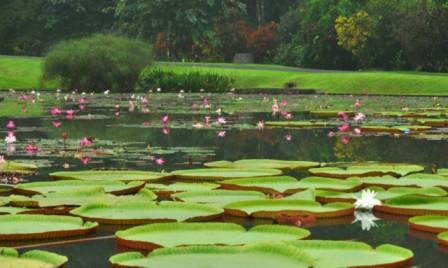 Tempat Wisata Alam di Jawa Barat - Kebun Raya Bogor