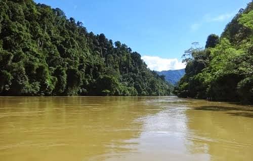 Hutan Lindung Sungai Sesayap