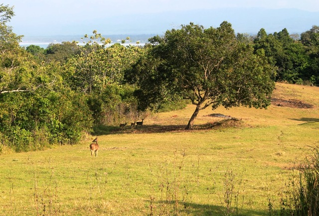 Tempat Wisata Banyuwangi - Cagar Alam Baluran