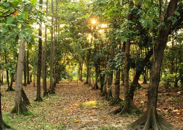 Hutan Kota