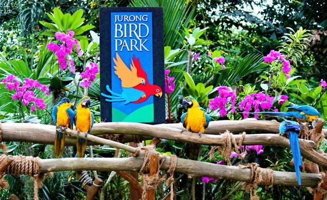 Wisata Singapura - Taman Burung Jurong (Jurong Bird Park)