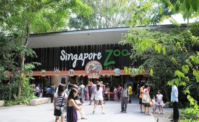 Wisata Singapura - Kebun Binatang (Singapore Zoo)