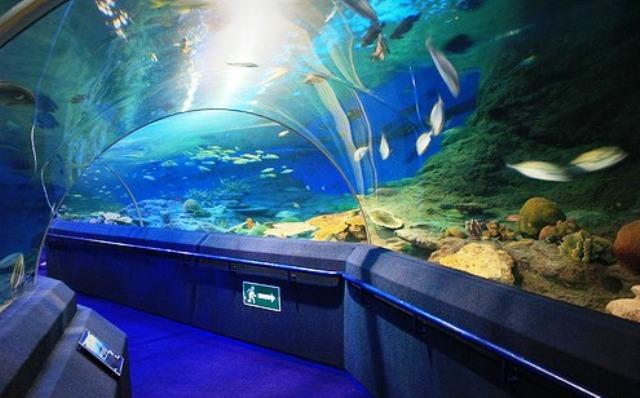 Wisata Singapura - Underwater World