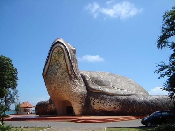 Kura-kura Ocean Park